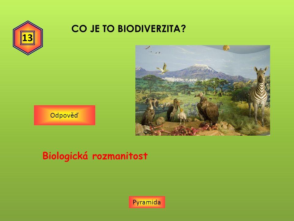 CO JE TO BIODIVERZITA? Pyramida Odpověď 13 Biologická rozmanitost