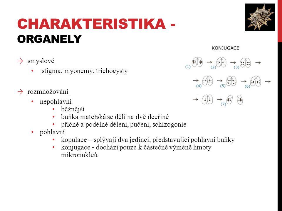 → smyslové stigma; myonemy; trichocysty → rozmnožování nepohlavní běžnější buňka mateřská se dělí na dvě dceřiné příčné a podélné dělení, pučení, schizogonie pohlavní kopulace – splývají dva jedinci, představující pohlavní buňky konjugace - dochází pouze k částečné výměně hmoty mikronukleů CHARAKTERISTIKA - ORGANELY