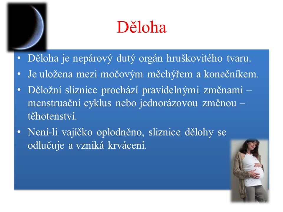 Děloha Děloha je nepárový dutý orgán hruškovitého tvaru.