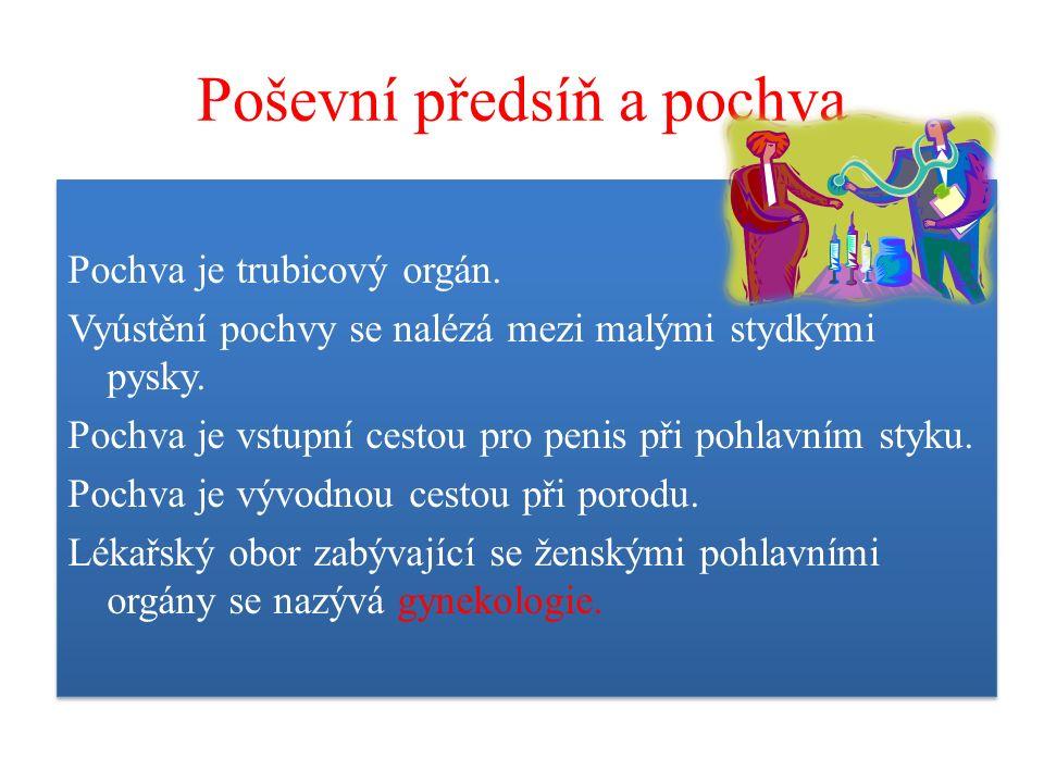 Poševní předsíň a pochva Pochva je trubicový orgán.