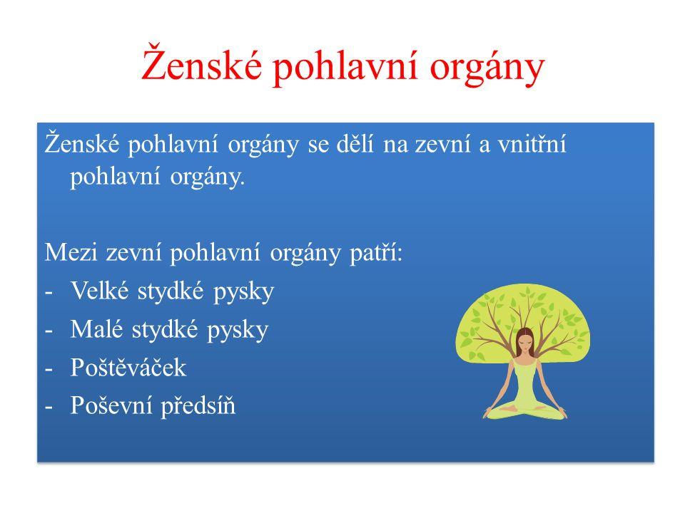 Ženské pohlavní orgány Ženské pohlavní orgány se dělí na zevní a vnitřní pohlavní orgány. Mezi zevní pohlavní orgány patří: -Velké stydké pysky -Malé