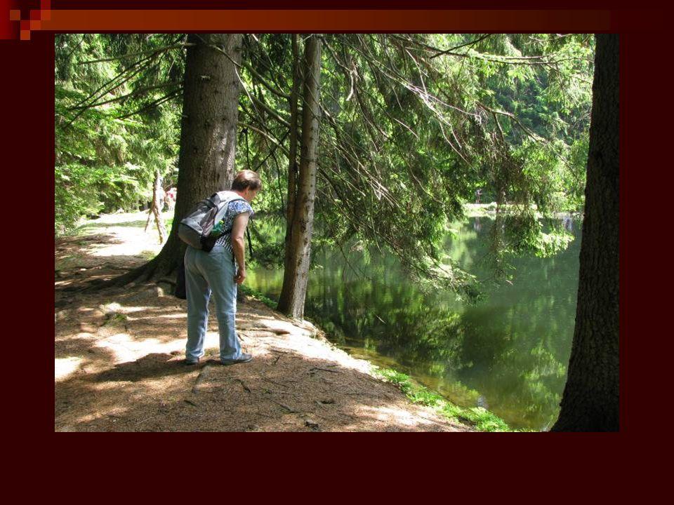 Je to opět krásné místo, jeden z nejzachovalejších komplexů šumavských hvozdů.