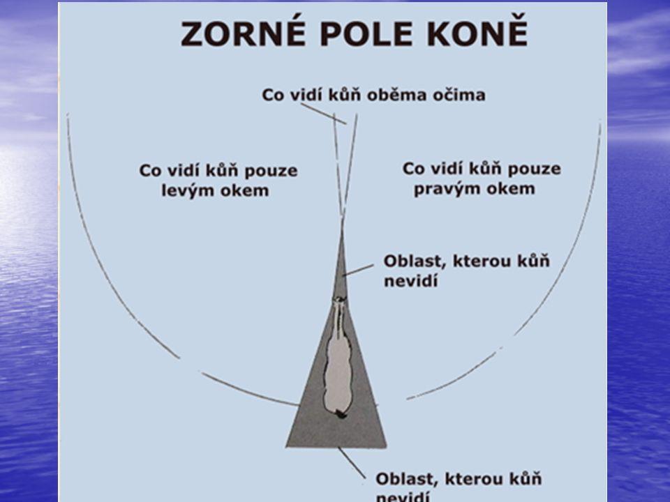 Smyslové schopnosti koní Sluch Sluch Citlivě reaguje na zvuk – schopnost nasměrovat uši – pozornost Rozsah citlivosti: člověk – 20 Hz až 20 kHz kůň – 55 Hz až 35 kHz – vyšší tóny Hlasité podněty působí až bolestivě, ale zvykne si Dobře rozlišuje rytmus a tón – pomůcky Rozliší místo původu zvuku – 10°