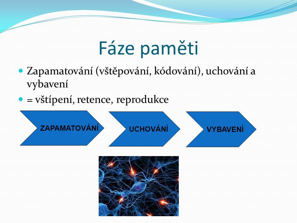Funkce paměti Uchovávání a užívání získaného,v paměti uloženého vědění (poznání, informací) V paměti uložené vědění umožňuje identifikaci (rozpoznávání) vnímaných objektů (proces, který se odehrává bez účasti vědomí) V paměti uložené vědění (poznání) umožňuje dále řešení problémů a přiměřené chování v konkrétních situacích, a také užívání dovedností a návyků Díky paměti člověk identifikuje objekt - co to je ( kognitivní složka) a co pro něj znamená – vztah k objektu (emocionální složka)