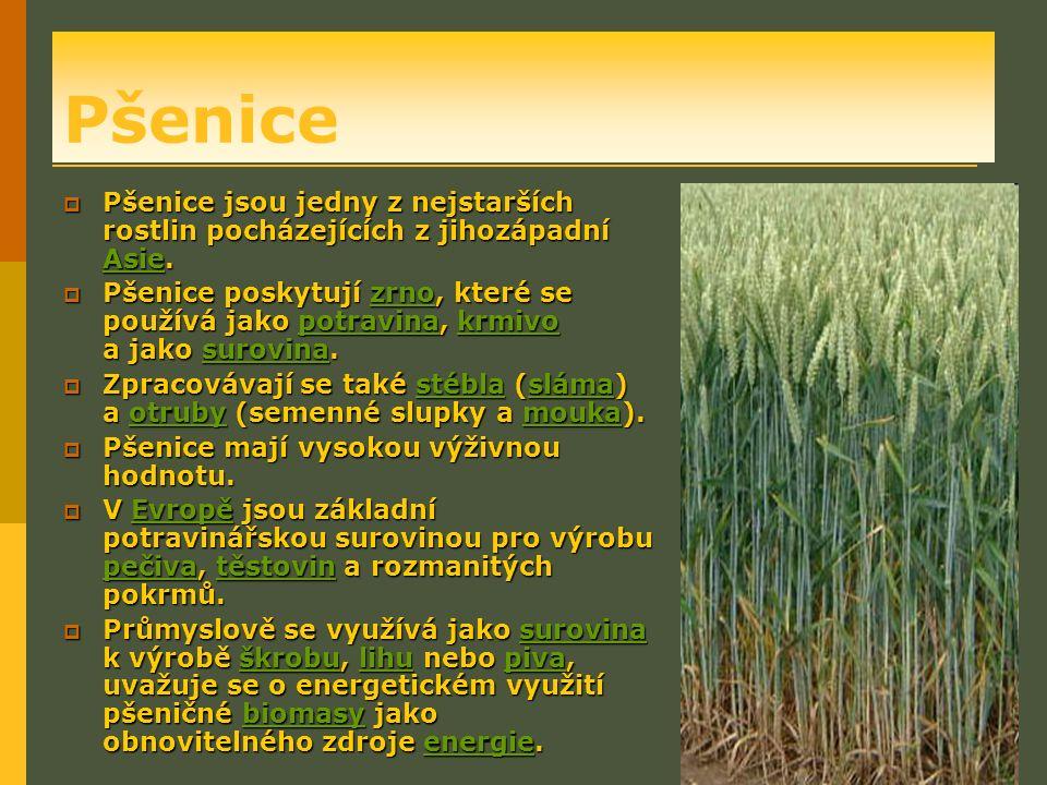 Pšenice  Pšenice jsou jedny z nejstarších rostlin pocházejících z jihozápadní Asie.