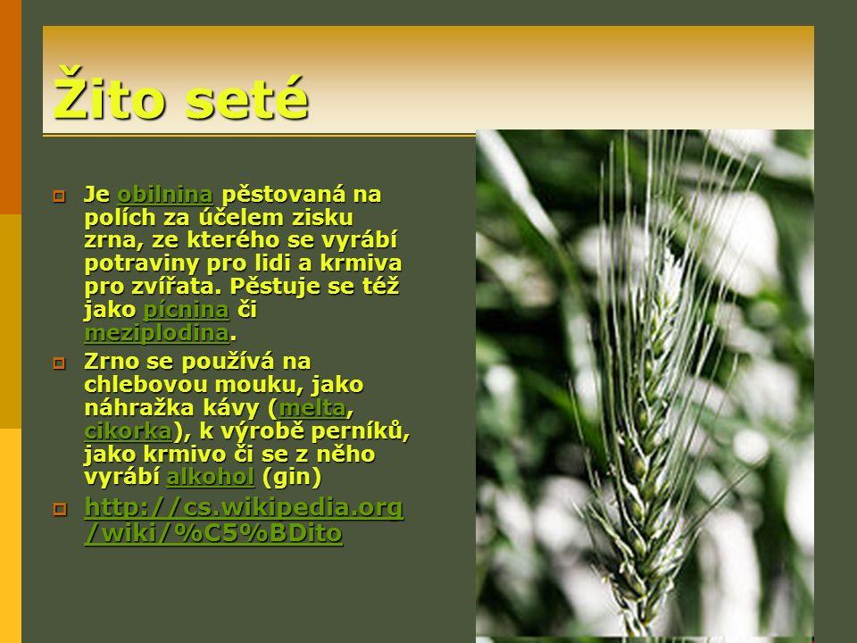 Žito seté  Je obilnina pěstovaná na polích za účelem zisku zrna, ze kterého se vyrábí potraviny pro lidi a krmiva pro zvířata.