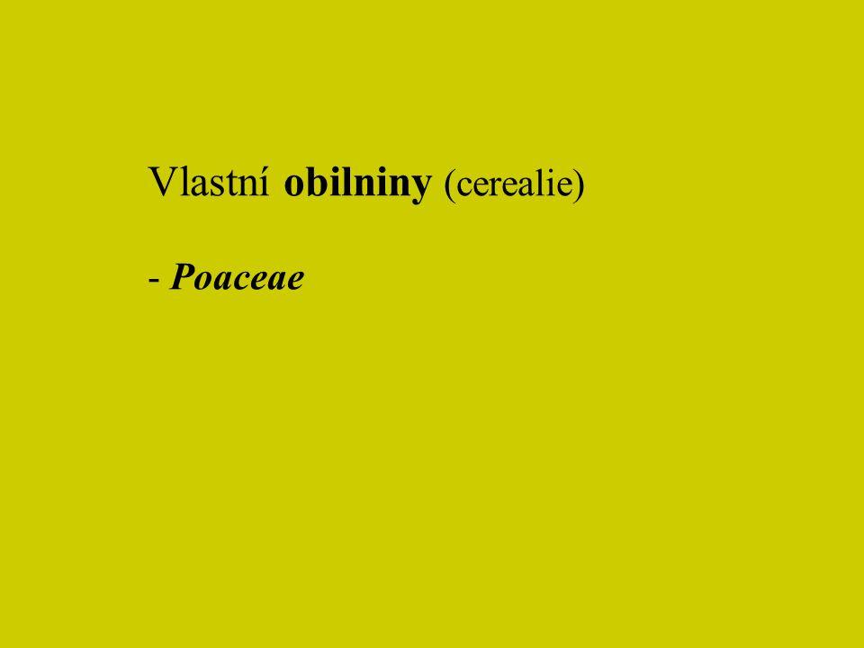 Vlastní obilniny (cerealie) - Poaceae