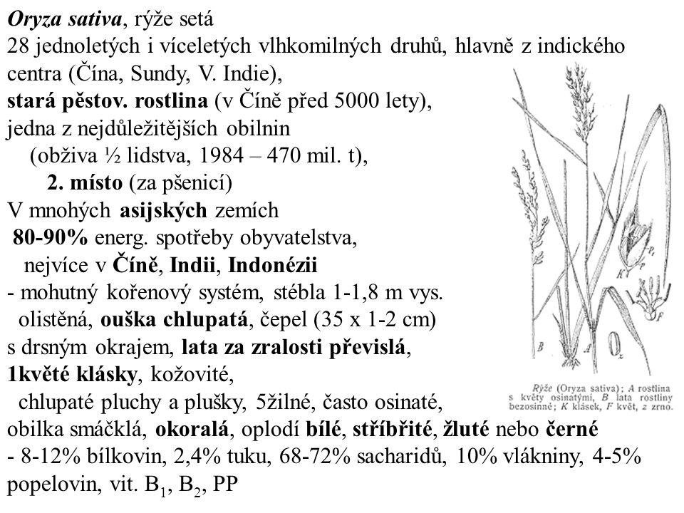 Oryza sativa, rýže setá 28 jednoletých i víceletých vlhkomilných druhů, hlavně z indického centra (Čína, Sundy, V.