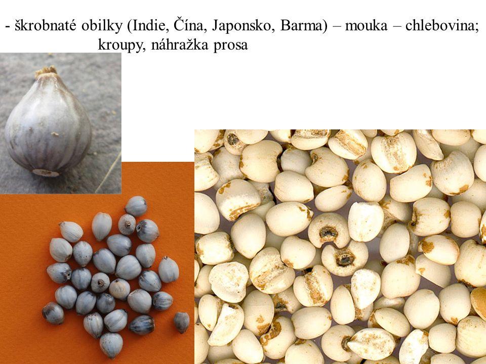 - škrobnaté obilky (Indie, Čína, Japonsko, Barma) – mouka – chlebovina; kroupy, náhražka prosa