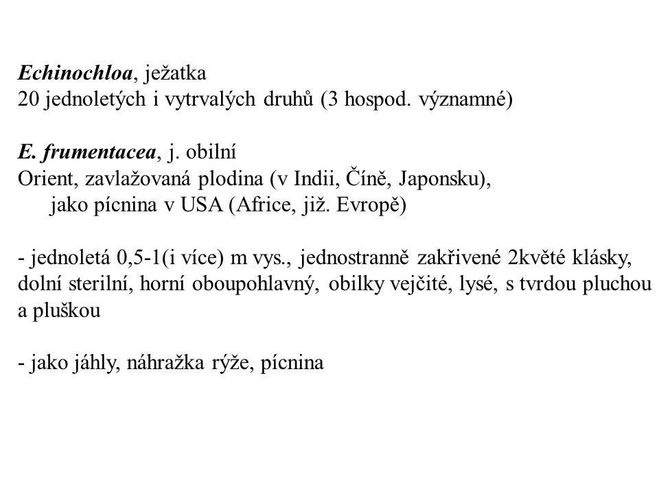 Echinochloa, ježatka 20 jednoletých i vytrvalých druhů (3 hospod.