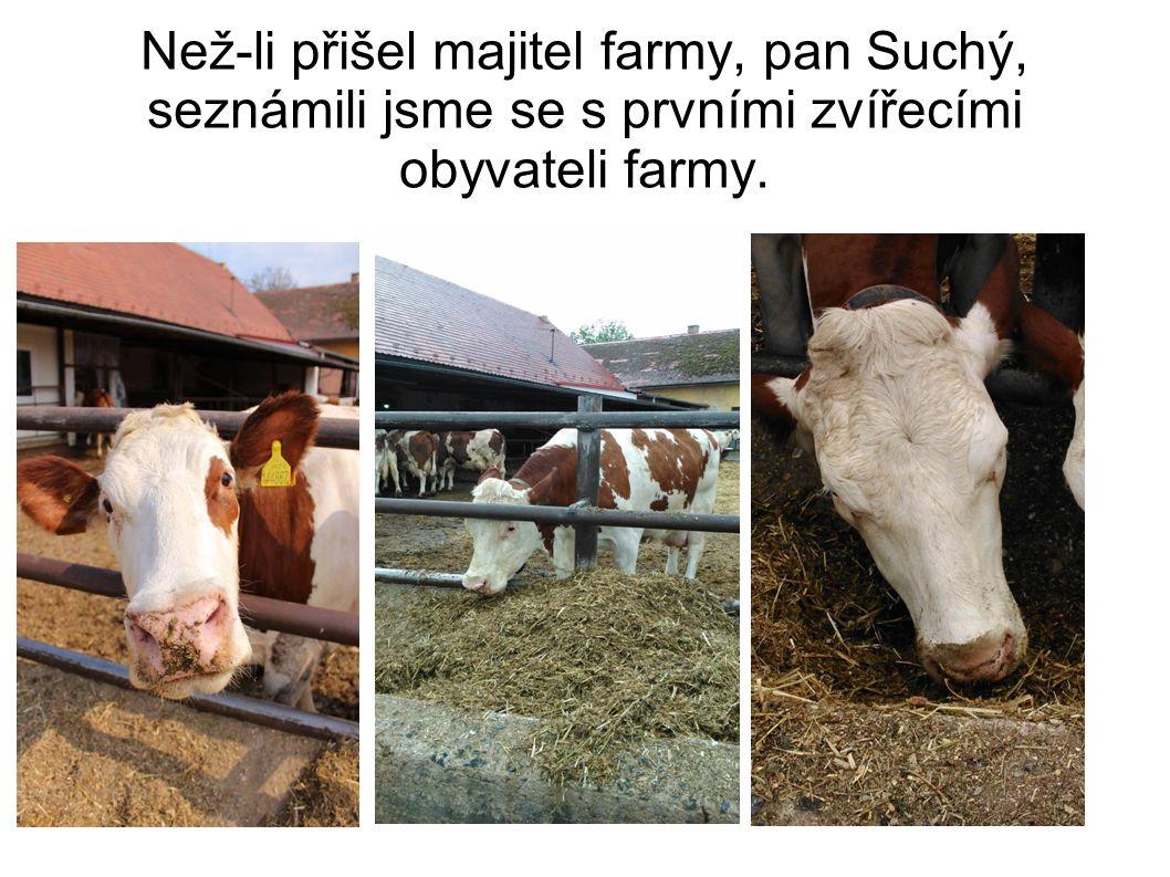 Než-li přišel majitel farmy, pan Suchý, seznámili jsme se s prvními zvířecími obyvateli farmy.