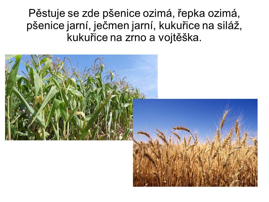 Pěstuje se zde pšenice ozimá, řepka ozimá, pšenice jarní, ječmen jarní, kukuřice na siláž, kukuřice na zrno a vojtěška.