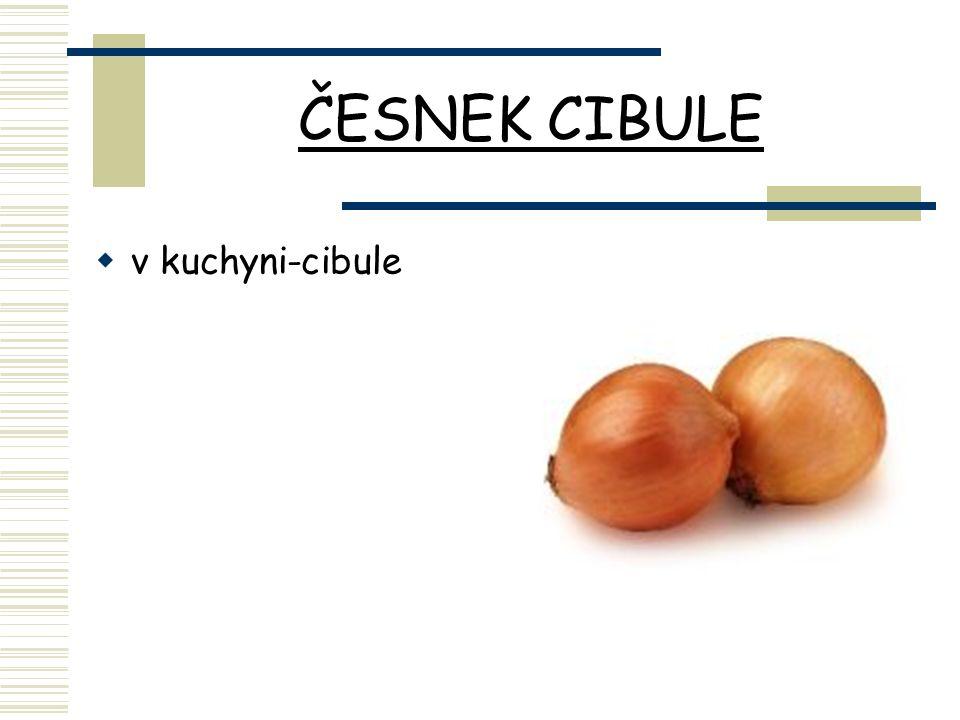 ČESNEK CIBULE  v kuchyni-cibule