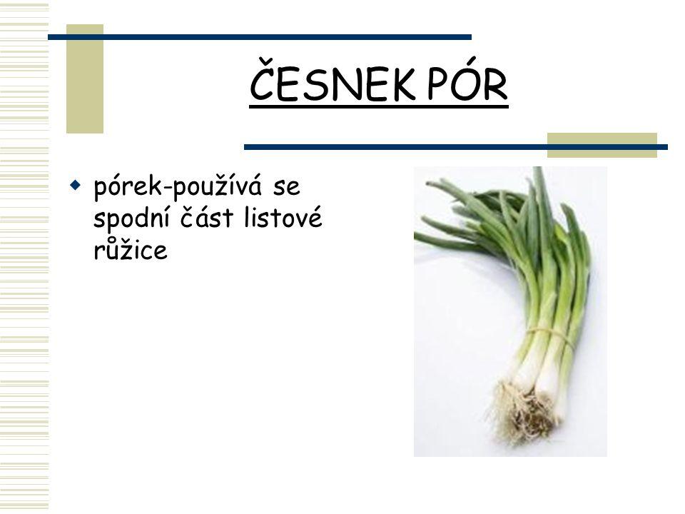 ČESNEK PÓR  pórek-používá se spodní část listové růžice