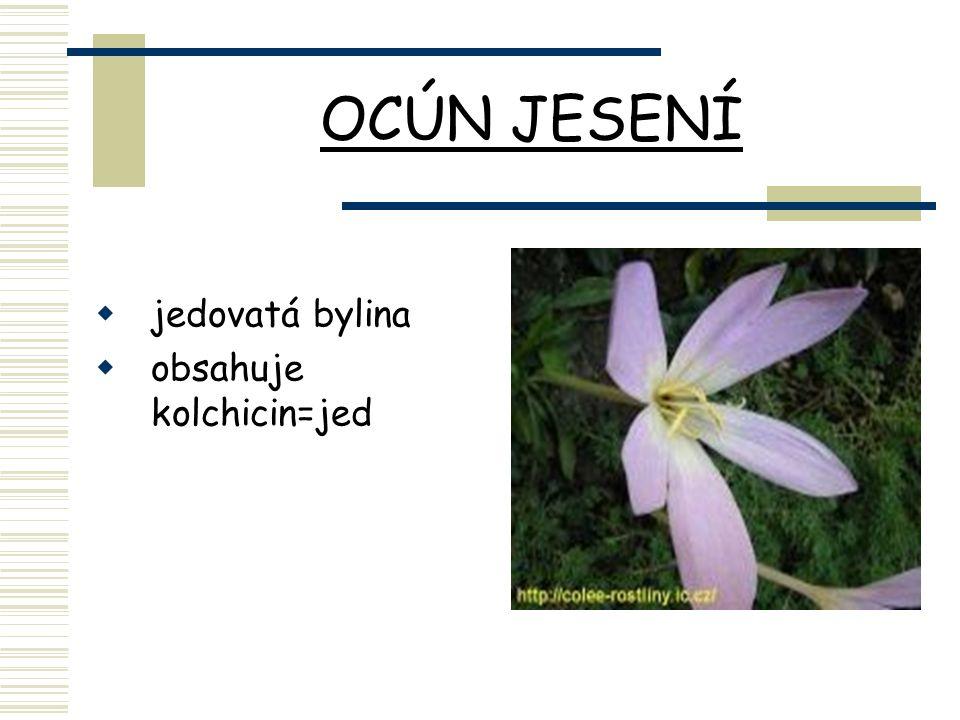 OCÚN JESENÍ  jedovatá bylina  obsahuje kolchicin=jed