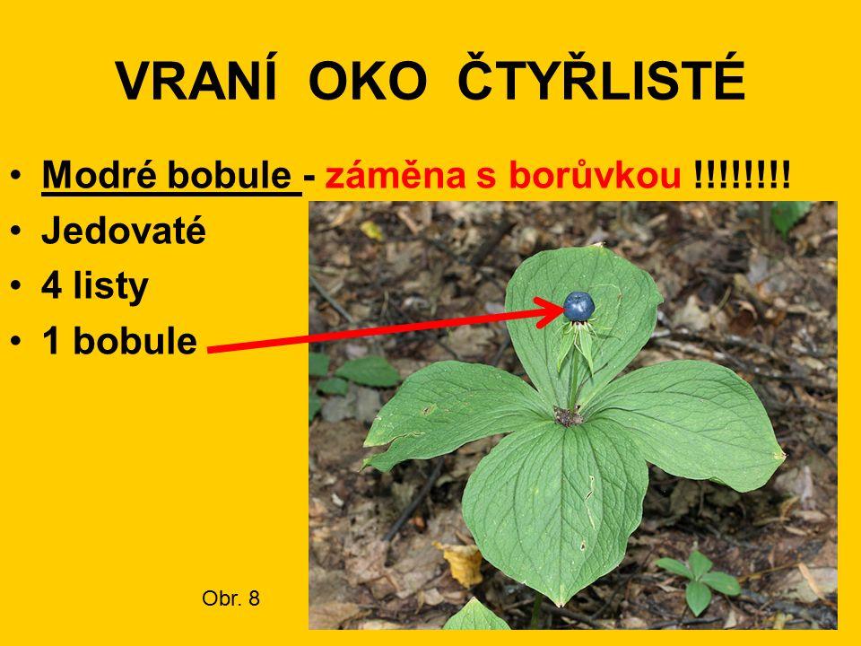 VRANÍ OKO ČTYŘLISTÉ Modré bobule - záměna s borůvkou !!!!!!!! Jedovaté 4 listy 1 bobule Obr. 8
