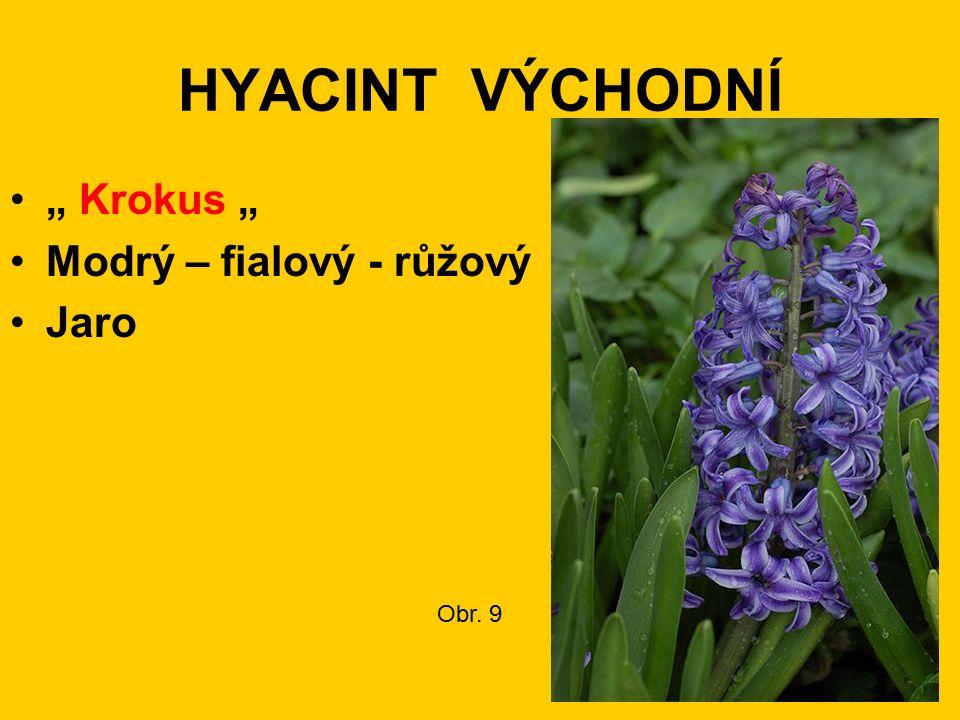 """HYACINT VÝCHODNÍ """" Krokus """" Modrý – fialový - růžový Jaro Obr. 9"""