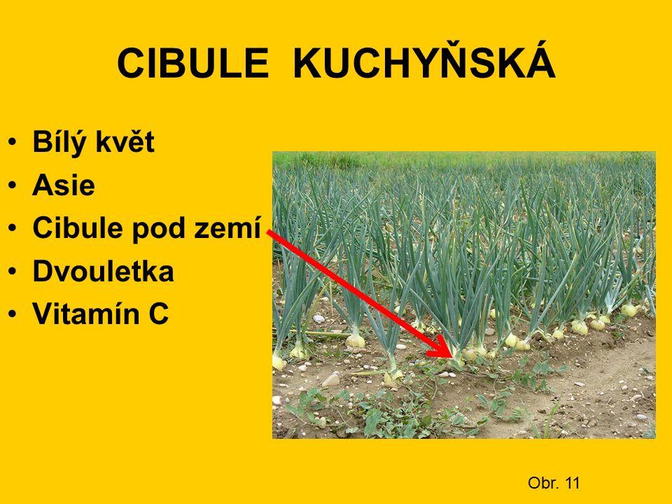CIBULE KUCHYŇSKÁ Bílý květ Asie Cibule pod zemí Dvouletka Vitamín C Obr. 11