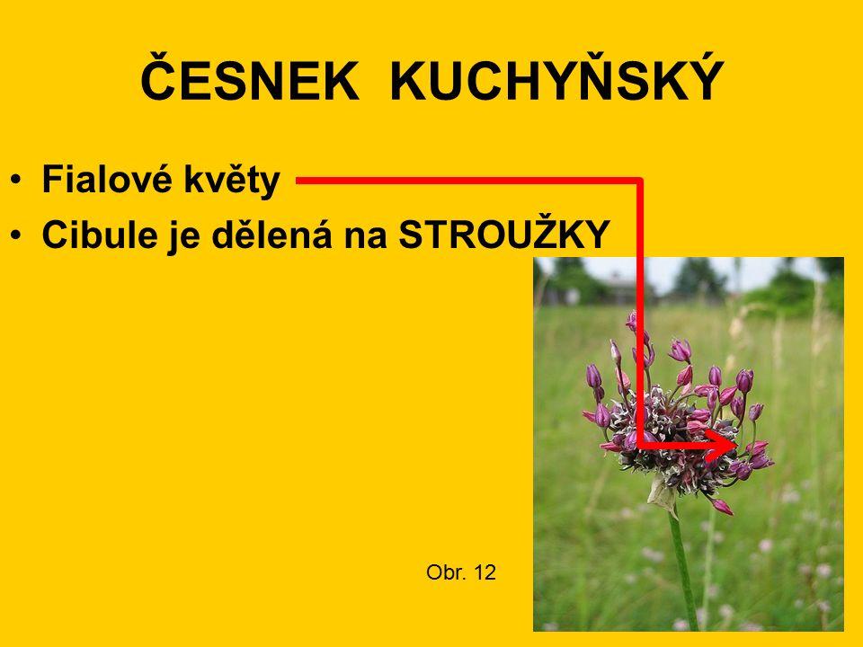 ČESNEK KUCHYŇSKÝ Fialové květy Cibule je dělená na STROUŽKY Obr. 12