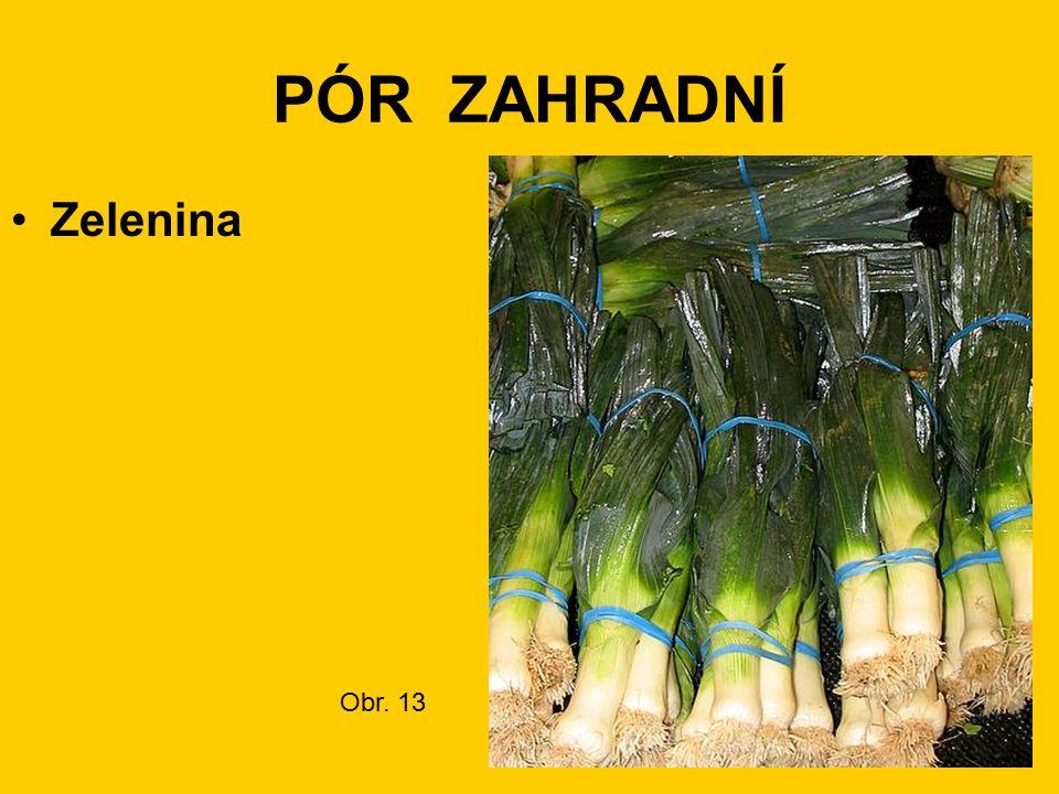 PÓR ZAHRADNÍ Zelenina Obr. 13