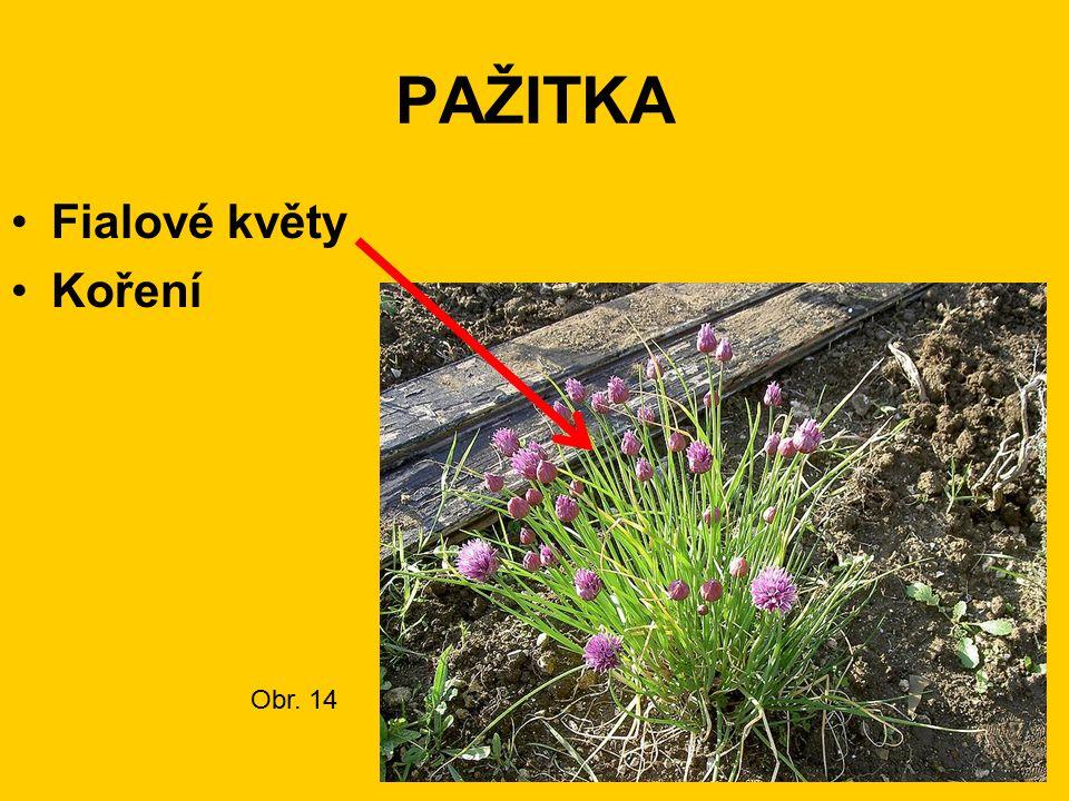 PAŽITKA Fialové květy Koření Obr. 14