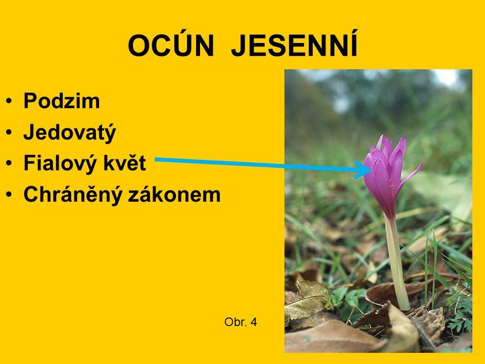 OCÚN JESENNÍ Podzim Jedovatý Fialový květ Chráněný zákonem Obr. 4