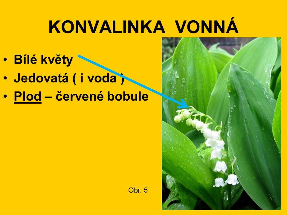 KONVALINKA VONNÁ Bílé květy Jedovatá ( i voda ) Plod – červené bobule Obr. 5