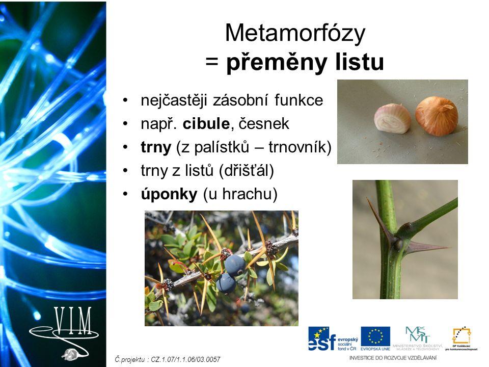 Č.projektu : CZ.1.07/1.1.06/03.0057 Metamorfózy = přeměny listu nejčastěji zásobní funkce např. cibule, česnek trny (z palístků – trnovník) trny z lis