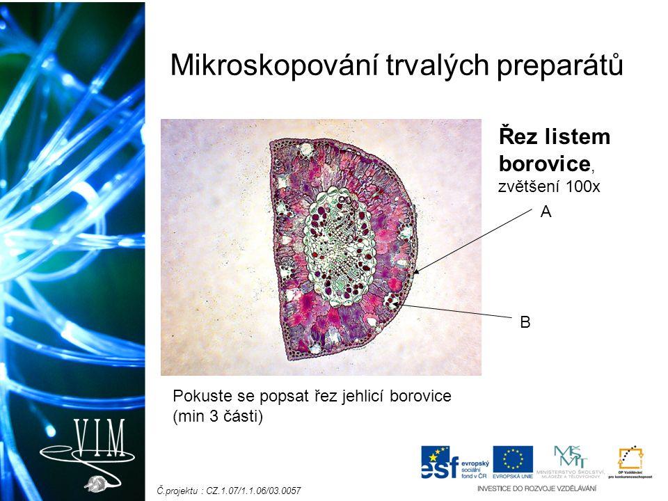 Č.projektu : CZ.1.07/1.1.06/03.0057 Mikroskopování trvalých preparátů Řez listem borovice, zvětšení 100x A B Pokuste se popsat řez jehlicí borovice (m