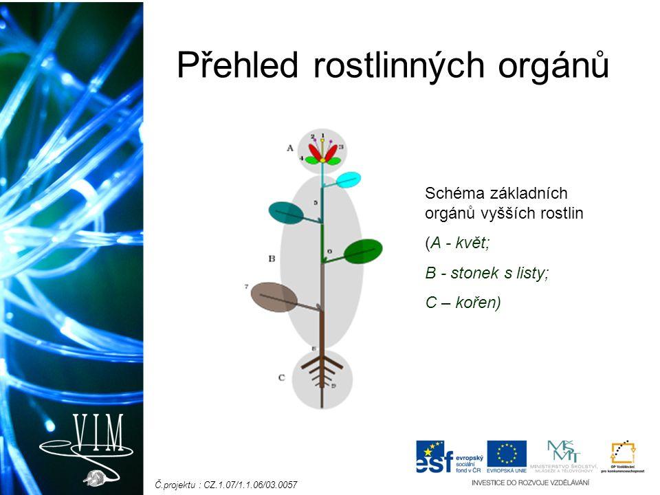 Č.projektu : CZ.1.07/1.1.06/03.0057 Přehled rostlinných orgánů Schéma základních orgánů vyšších rostlin (A - květ; B - stonek s listy; C – kořen)