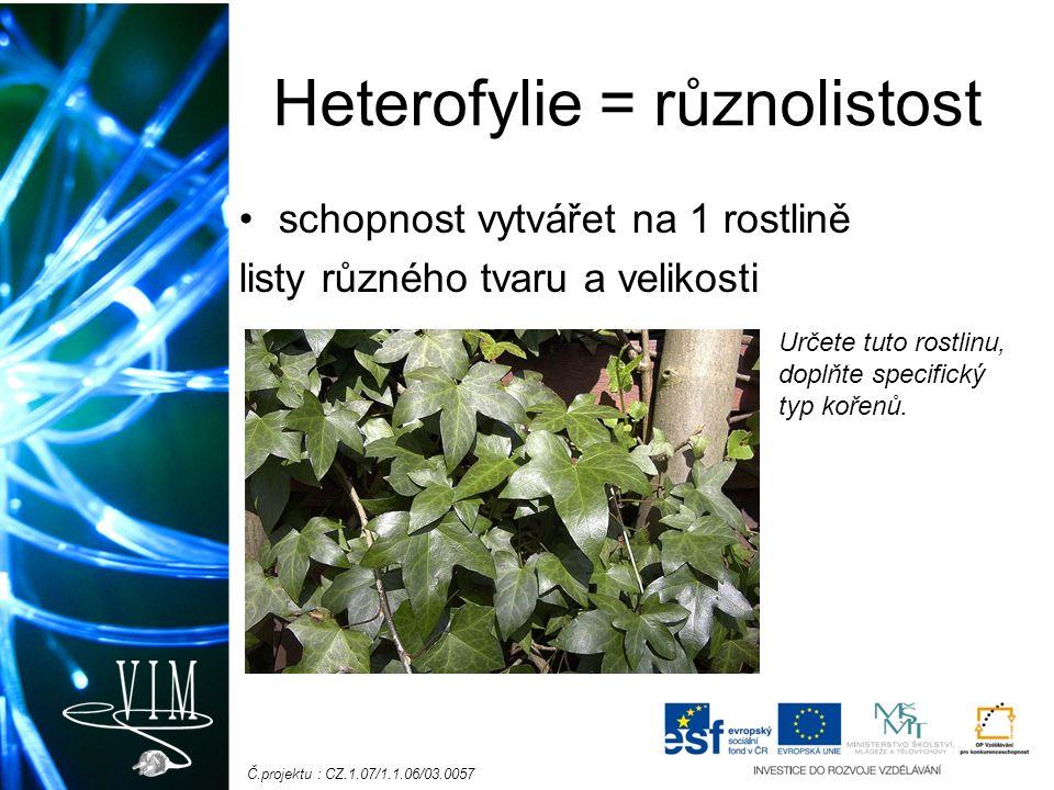 Č.projektu : CZ.1.07/1.1.06/03.0057 Heterofylie = různolistost schopnost vytvářet na 1 rostlině listy různého tvaru a velikosti Určete tuto rostlinu,