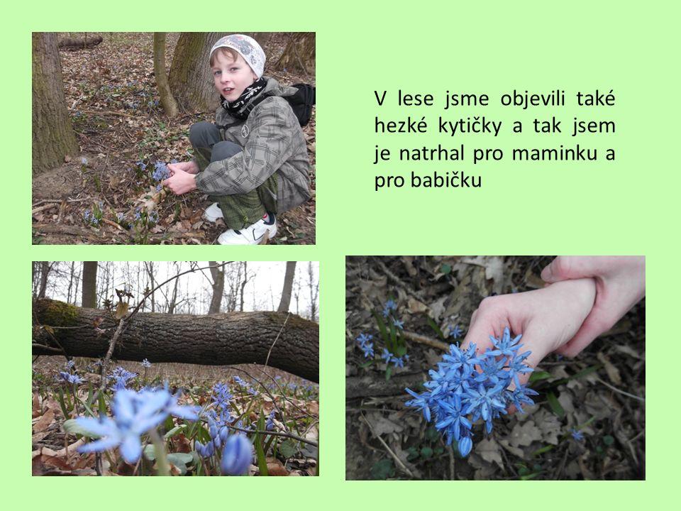 V lese jsme objevili také hezké kytičky a tak jsem je natrhal pro maminku a pro babičku