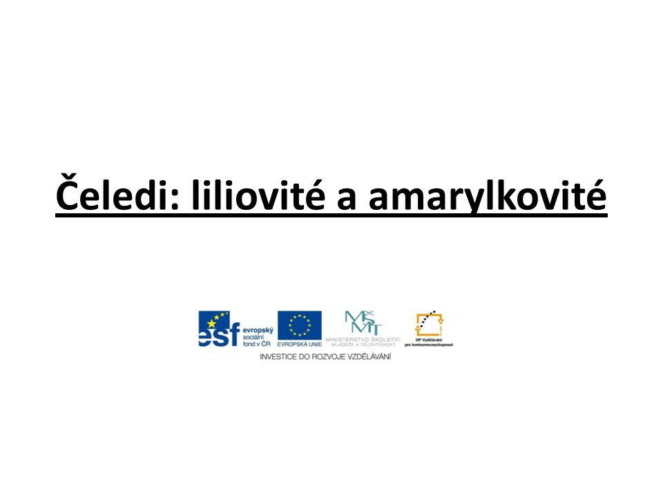 Čeledi: liliovité a amarylkovité