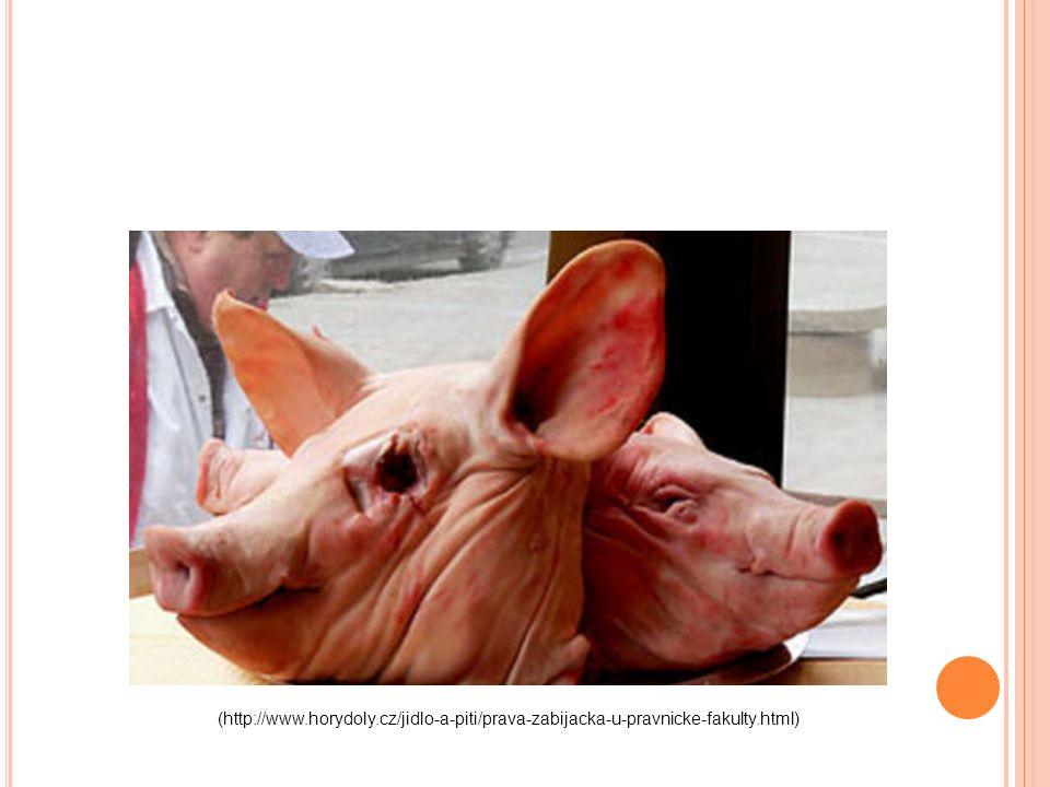(http://www.horydoly.cz/jidlo-a-piti/prava-zabijacka-u-pravnicke-fakulty.html)