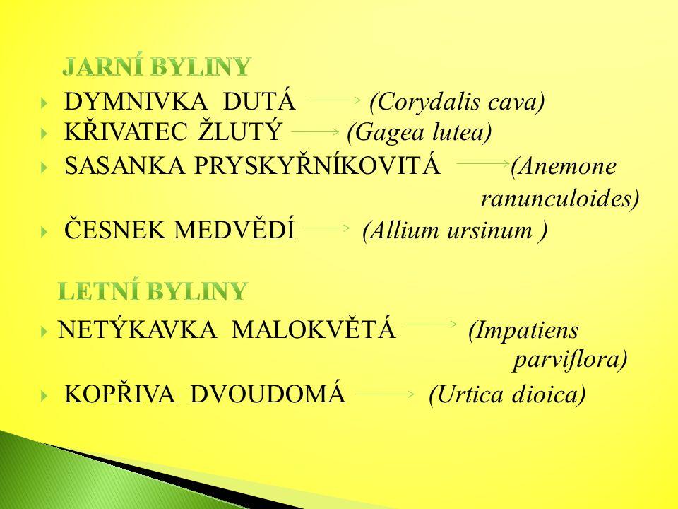  DYMNIVKA DUTÁ (Corydalis cava)  KŘIVATEC ŽLUTÝ (Gagea lutea)  SASANKA PRYSKYŘNÍKOVITÁ (Anemone ranunculoides)  ČESNEK MEDVĚDÍ (Allium ursinum )  NETÝKAVKA MALOKVĚTÁ (Impatiens  KOPŘIVA DVOUDOMÁ (Urtica dioica) parviflora)