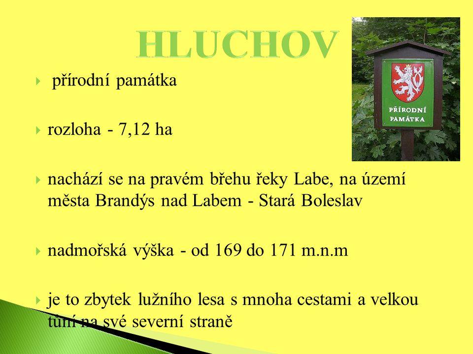  přírodní památka  rozloha - 7,12 ha  nachází se na pravém břehu řeky Labe, na území města Brandýs nad Labem - Stará Boleslav  nadmořská výška - od 169 do 171 m.n.m  je to zbytek lužního lesa s mnoha cestami a velkou tůní na své severní straně