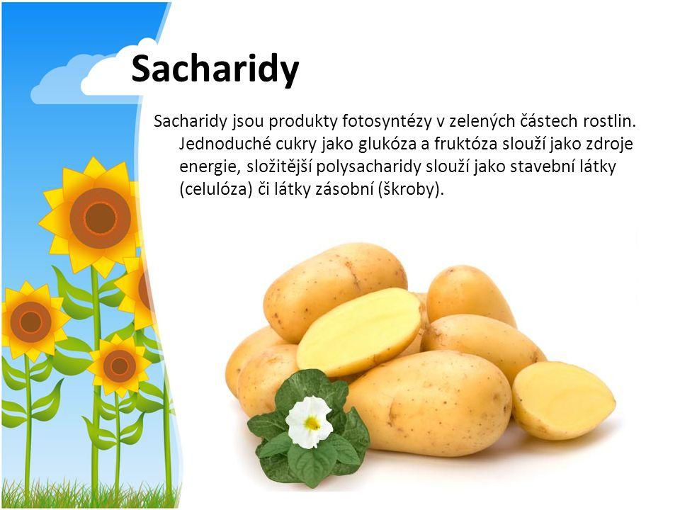 Sacharidy Sacharidy jsou produkty fotosyntézy v zelených částech rostlin. Jednoduché cukry jako glukóza a fruktóza slouží jako zdroje energie, složitě