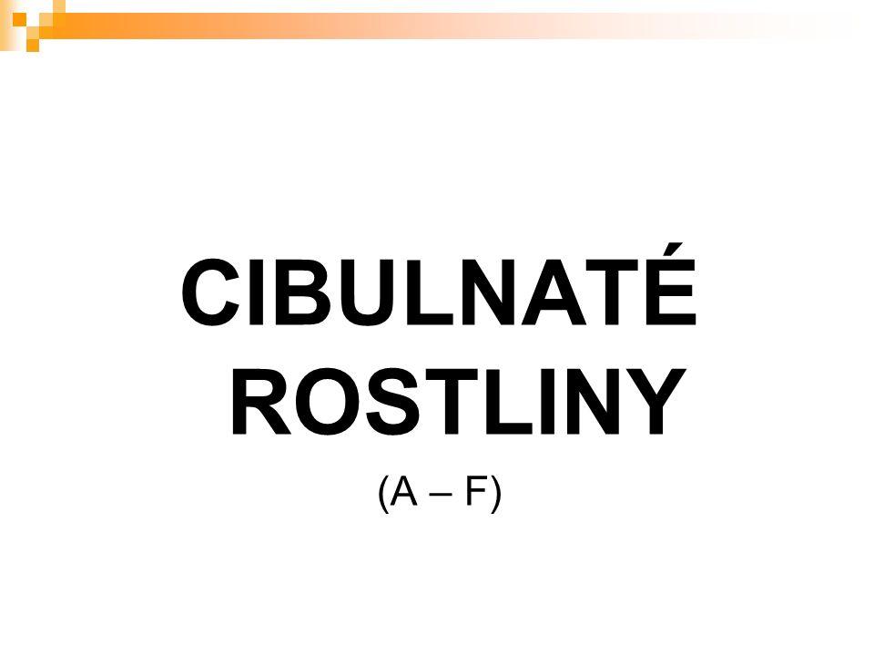 CIBULNATÉ ROSTLINY (A – F)