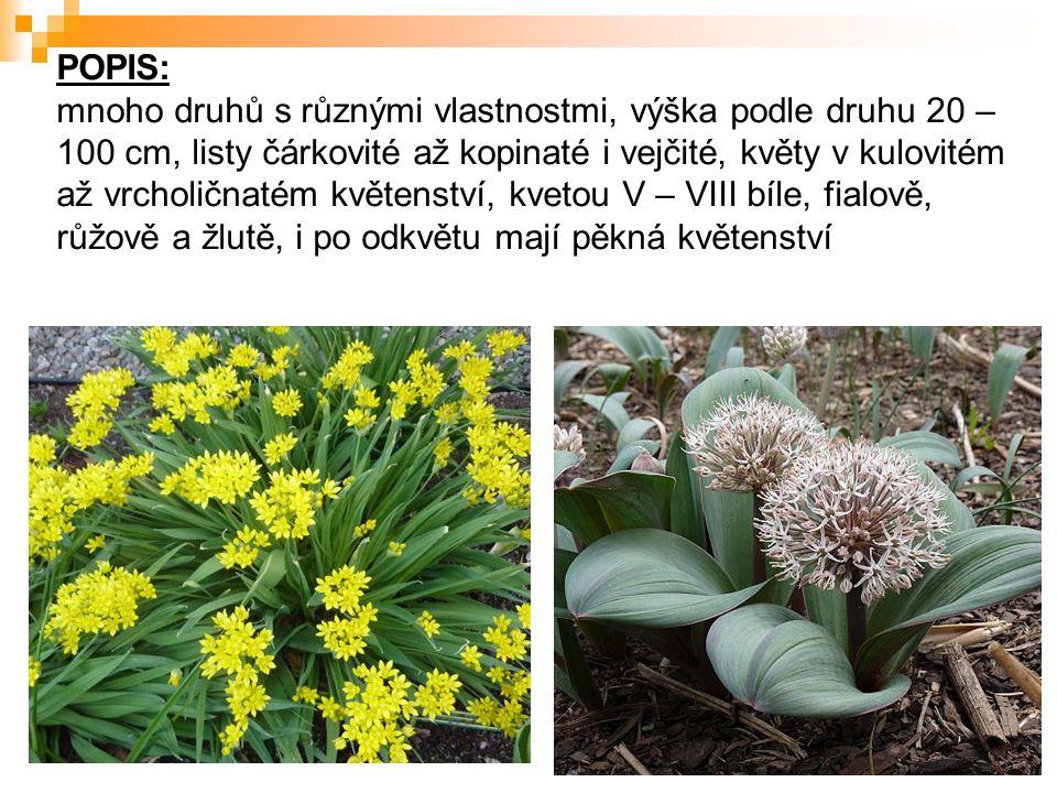 POPIS: mnoho druhů s různými vlastnostmi, výška podle druhu 20 – 100 cm, listy čárkovité až kopinaté i vejčité, květy v kulovitém až vrcholičnatém květenství, kvetou V – VIII bíle, fialově, růžově a žlutě, i po odkvětu mají pěkná květenství