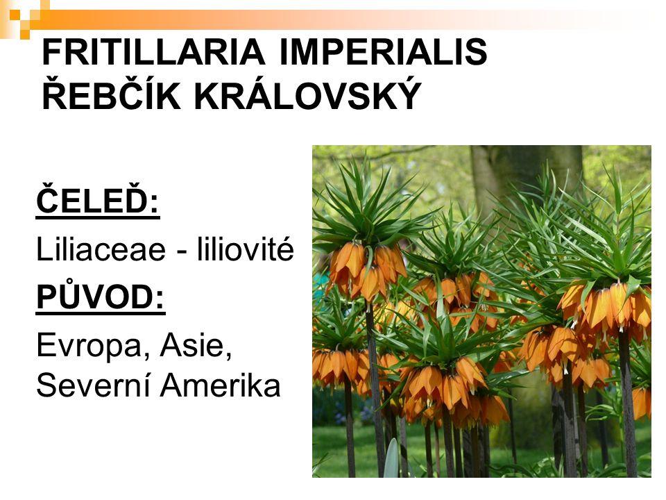 FRITILLARIA IMPERIALIS ŘEBČÍK KRÁLOVSKÝ ČELEĎ: Liliaceae - liliovité PŮVOD: Evropa, Asie, Severní Amerika