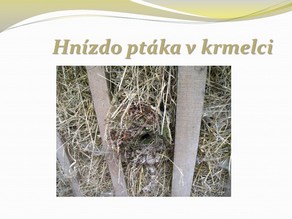 Hnízdo ptáka v krmelci Hnízdo ptáka v krmelci