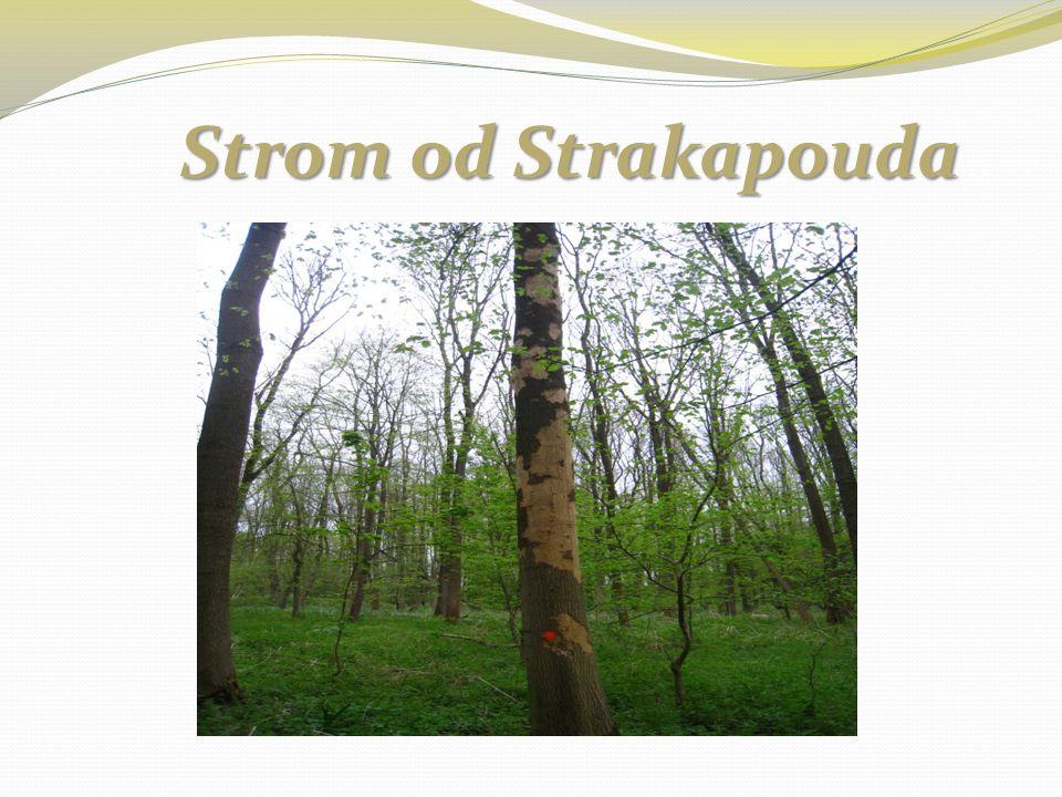 Strom od Strakapouda Strom od Strakapouda