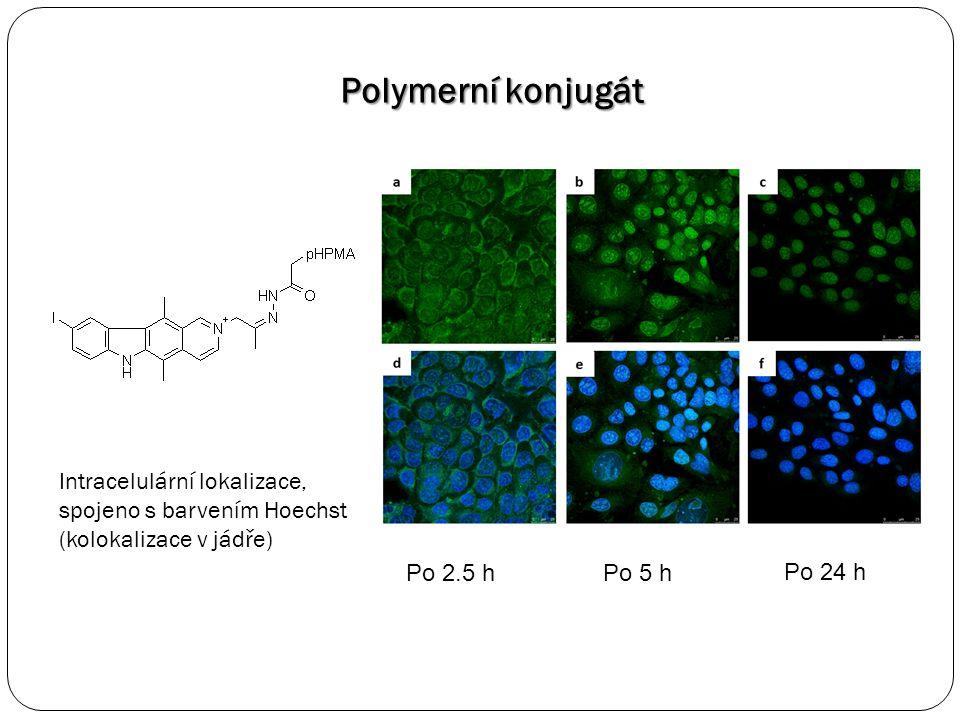 Polymerní konjugát Po 2.5 hPo 5 h Po 24 h Intracelulární lokalizace, spojeno s barvením Hoechst (kolokalizace v jádře)