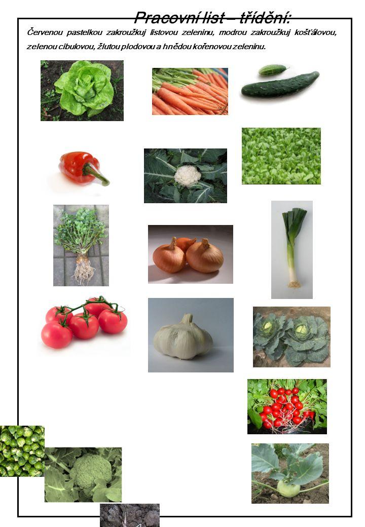 Červenou pastelkou zakroužkuj listovou zeleninu, modrou zakroužkuj košťálovou, zelenou cibulovou, žlutou plodovou a hnědou kořenovou zeleninu. Pracovn