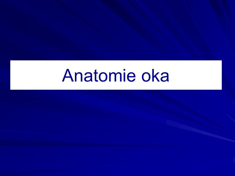Anatomie oka