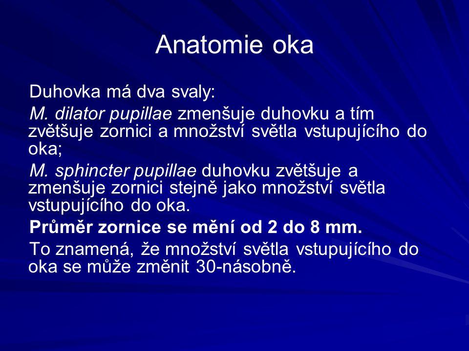 Anatomie oka Duhovka má dva svaly: M.