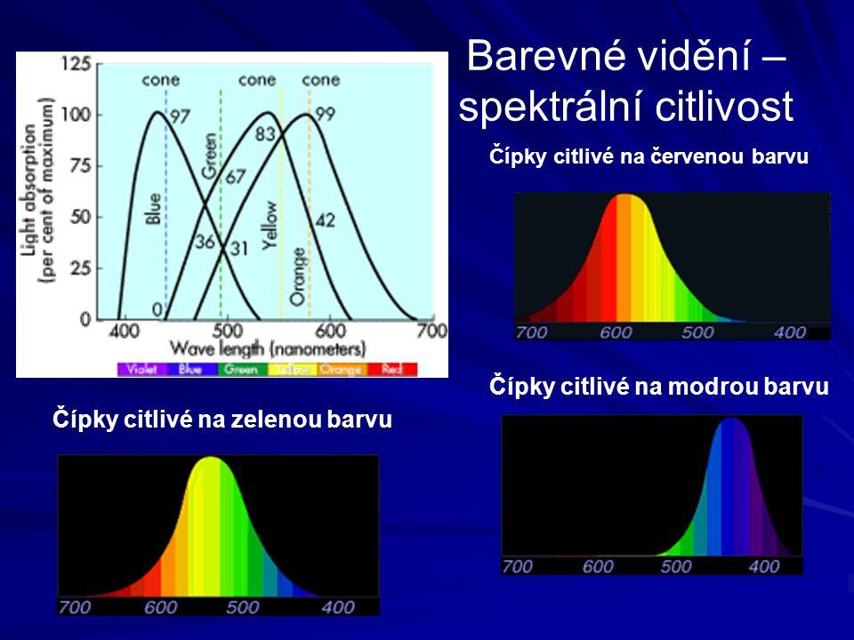 Barevné vidění – spektrální citlivost Čípky citlivé na zelenou barvu Čípky citlivé na modrou barvu Čípky citlivé na červenou barvu