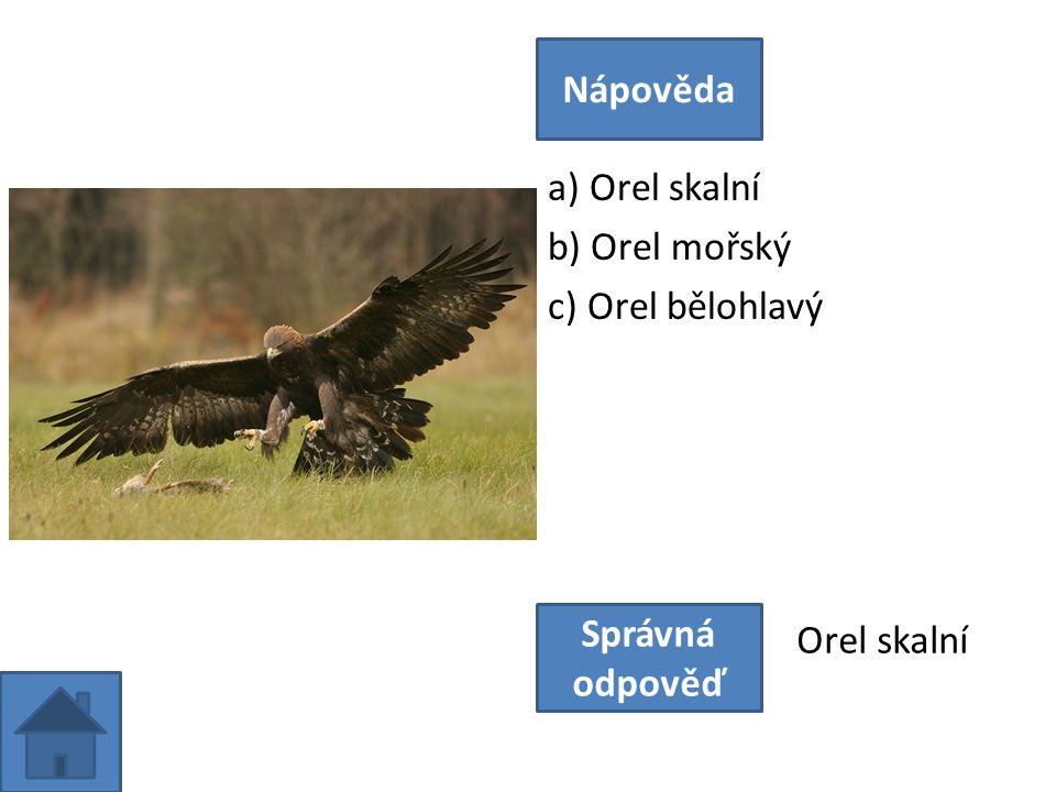 a) Orel skalní b) Orel mořský c) Orel bělohlavý Nápověda Správná odpověď Orel skalní