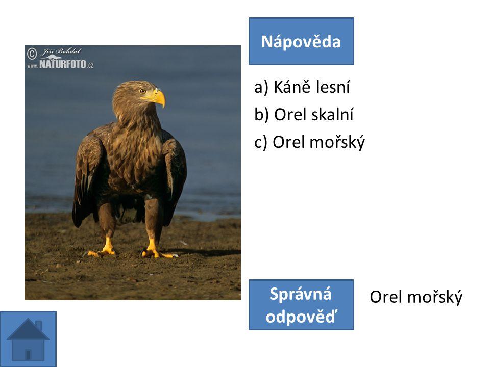 a) Káně lesní b) Orel skalní c) Orel mořský Nápověda Správná odpověď Orel mořský