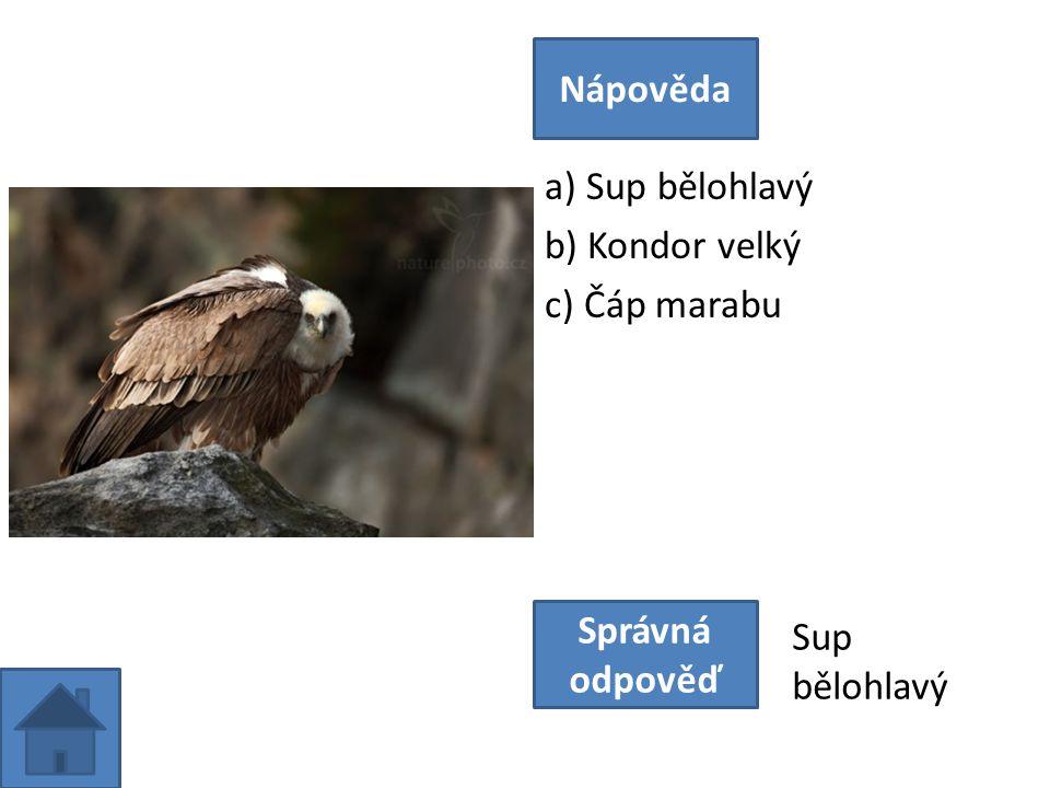 a) Sup bělohlavý b) Kondor velký c) Čáp marabu Nápověda Správná odpověď Sup bělohlavý
